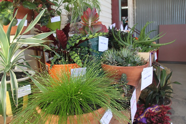 Inglewood Show Horticulture