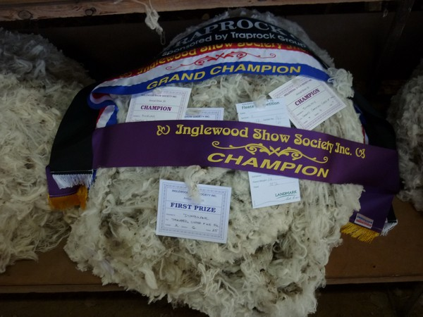 Champion Fleece 2014