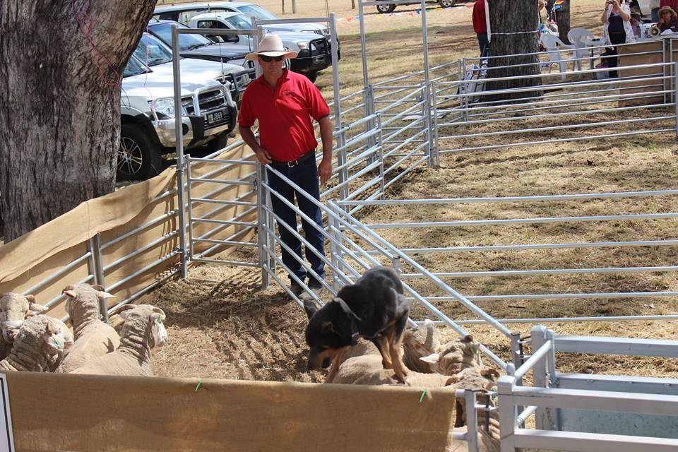 Yard Dog Trial 2015 - Glenn Banks