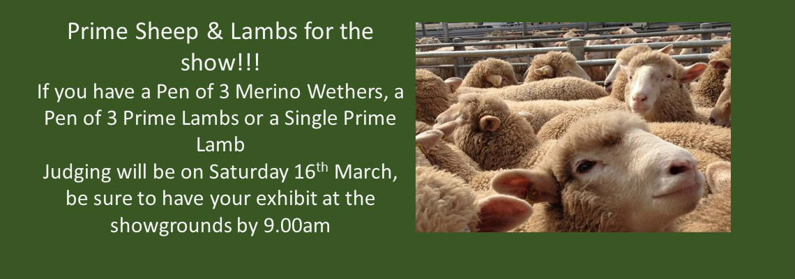 Prime Sheep & Lambs 2019